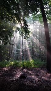 Hiking light