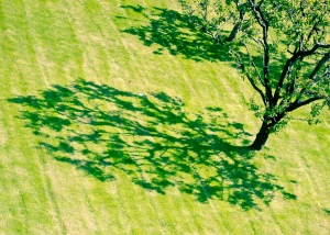 The Shadow of a Tree